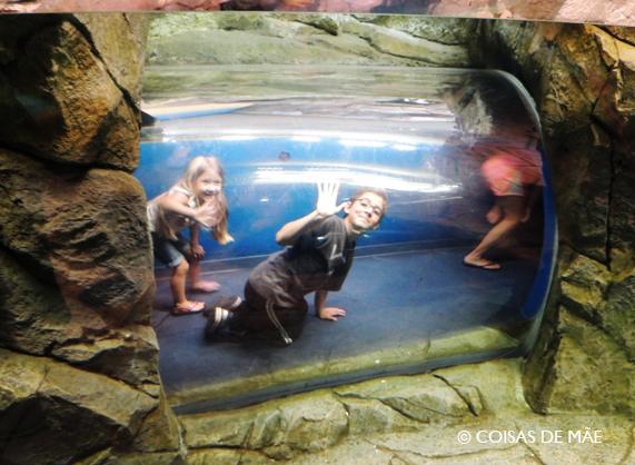 Brincadeiras no aquário